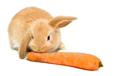 O coelho que gostava de espinafres
